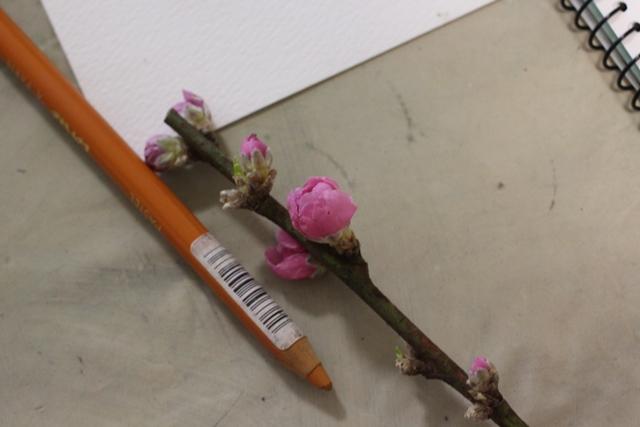 絵画教室 枚方 パステル画 デッサン スケッチ 絵 パステルアート 色のね いろのね ironone 明日香